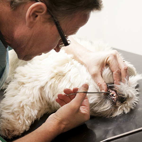 För veterinärer